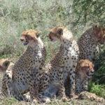 Serengeti, Safari, Tansania, guide, tour manager, east africa,Ilona Brenner,