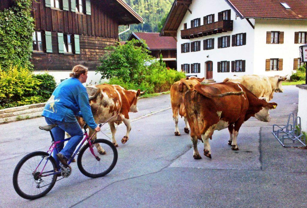 Bavaria, Upper Bavaria, village, Oberammergau, cow, meadow, stable, day excursion,